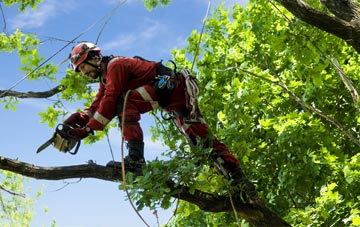 find trusted rated Brent Mill tree surgeons in Devon