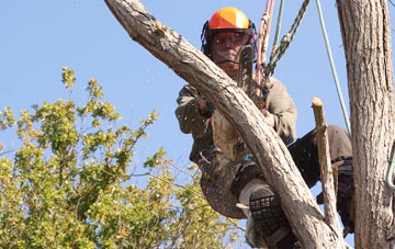 finding qualified Brent Mill tree surgeons