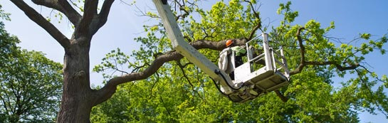 Brent Mill tree surgery services