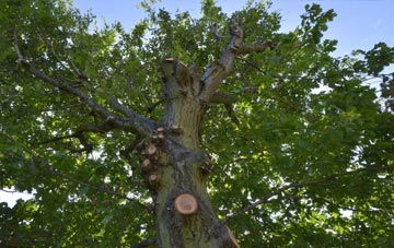 what is Brent Mill tree surgery?