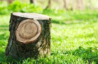 Brent Mill tree stump removal services