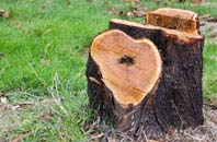 free Brent Mill tree stump removal quotes